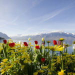 Montreux_Flowers_thumb